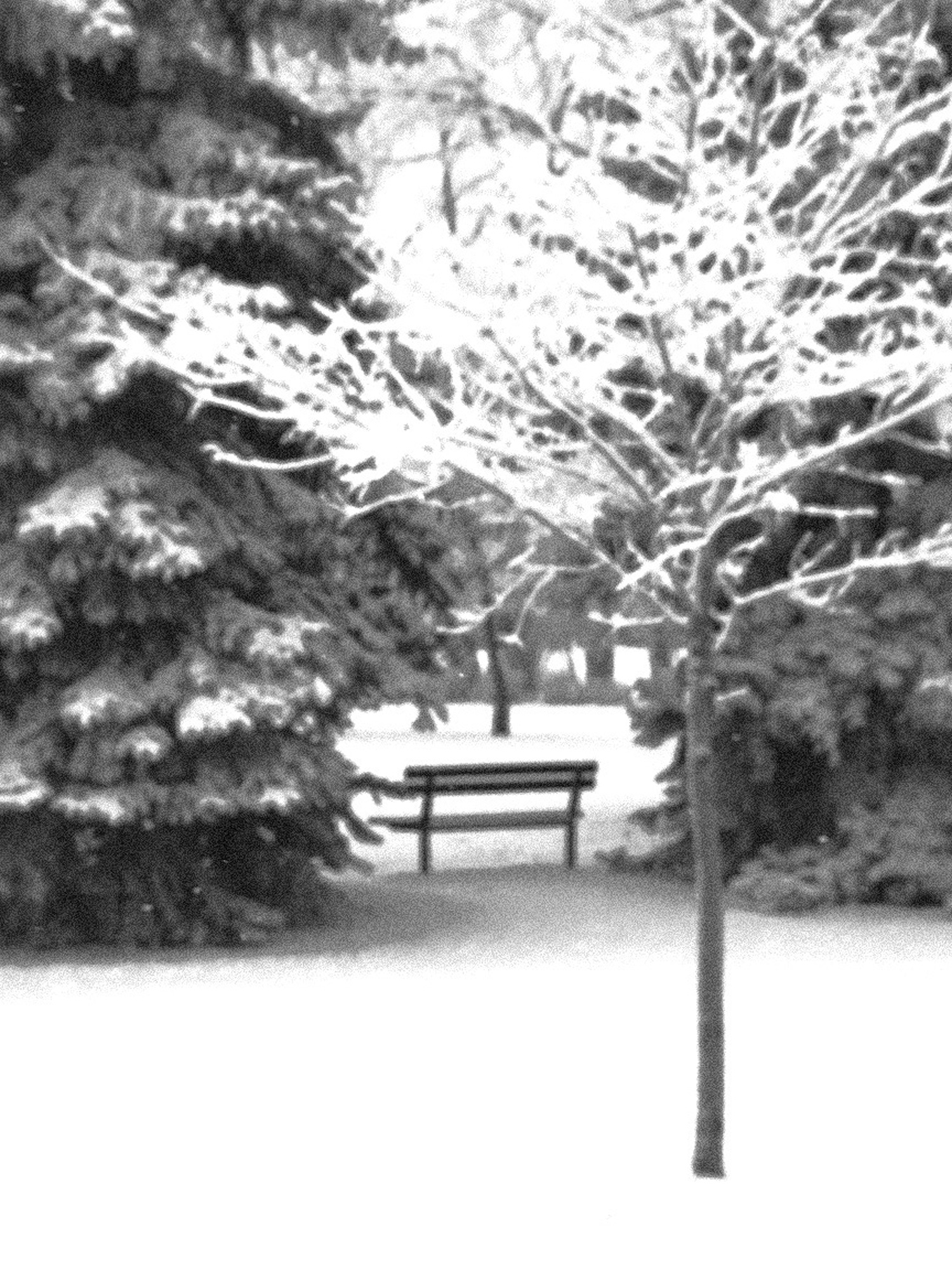Bench-in-Stanley-Park-Thumbnail